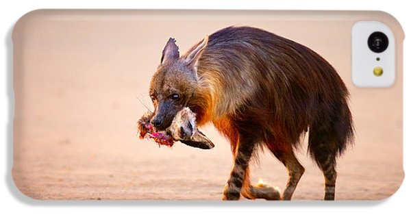 Bat iPhone 5c Case - Brown Hyena With Bat-eared Fox In Jaws by Johan Swanepoel