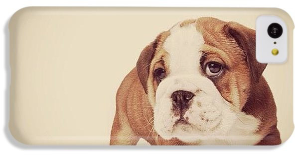 iPhone 5c Case - Bulldog Pup by Ritchie Garrod