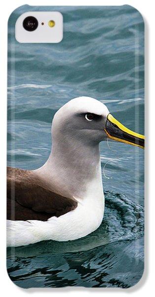 Buller's Albatross (thalassarche Bulleri IPhone 5c Case by Micah Wright