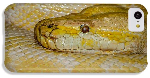 Burmese Python IPhone 5c Case by Ernie Echols