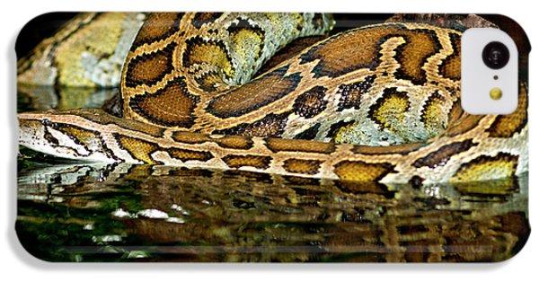 Python iPhone 5c Case - Burmese Python, Python Molurus by David Northcott