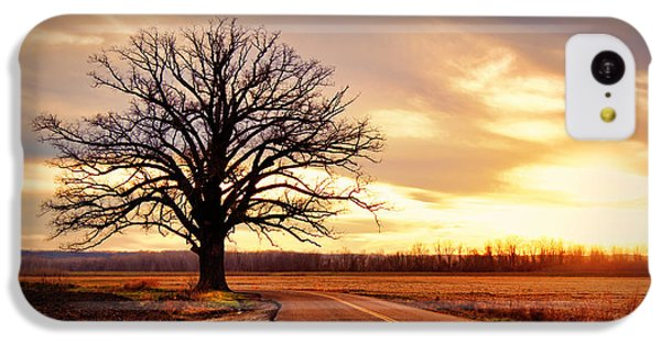 Burr Oak Silhouette IPhone 5c Case by Cricket Hackmann