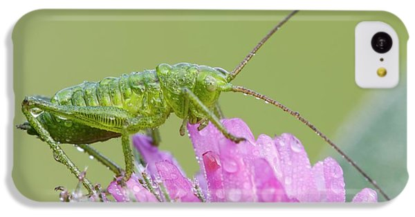 Bush Cricket IPhone 5c Case by Heath Mcdonald