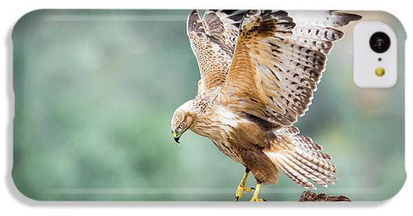 Buzzard iPhone 5c Case - Buteo Rufinus by E.amer