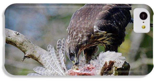 Buzzard iPhone 5c Case - Buzzard Preying On A Bird Carcass by Dr P. Marazzi