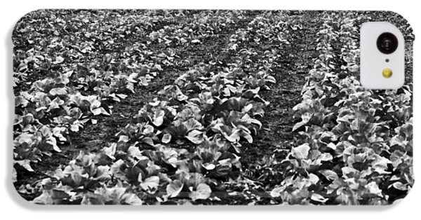 IPhone 5c Case featuring the photograph Cabbage Farming by Ricky L Jones