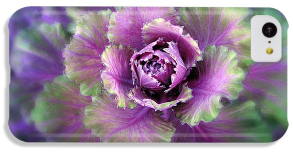 Cabbage Flower IPhone 5c Case