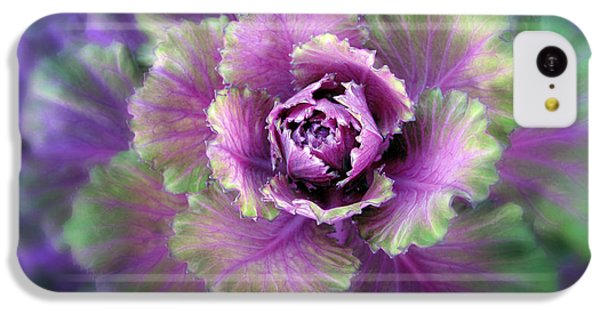 Cabbage Flower IPhone 5c Case by Jessica Jenney