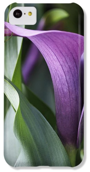 Calla Lily In Purple Ombre IPhone 5c Case by Rona Black