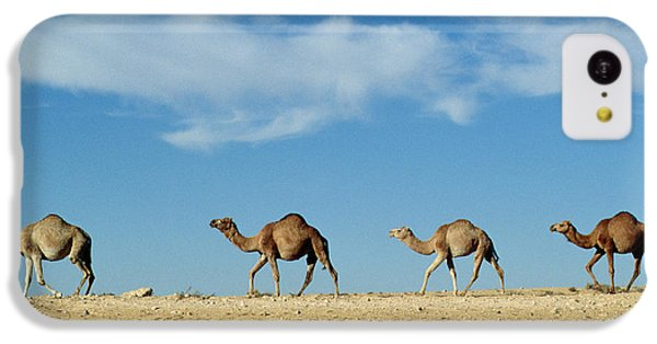 Desert iPhone 5c Case - Camel Train by Anonymous