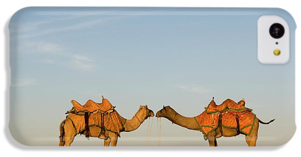 Camels Stand Face To Face In The Thar IPhone 5c Case