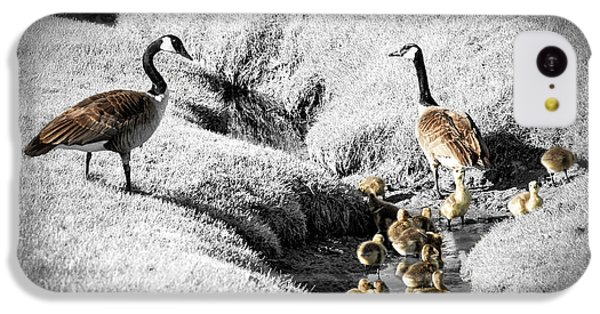 Canada Geese Family IPhone 5c Case by Elena Elisseeva