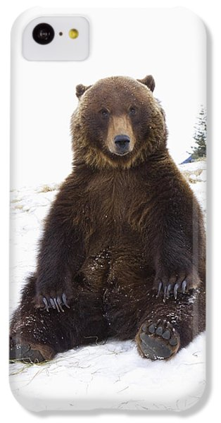 Captive Grizzly During Winter Sits IPhone 5c Case by Doug Lindstrand