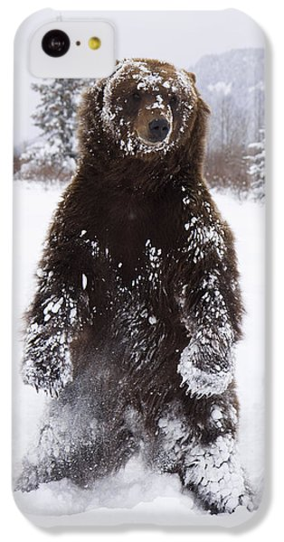 Captive Grizzly Stands On Hind Feet IPhone 5c Case by Doug Lindstrand