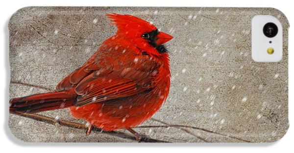 Cardinal In Snow IPhone 5c Case by Lois Bryan