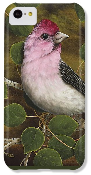 Finch iPhone 5c Case - Cassins Finch by Rick Bainbridge