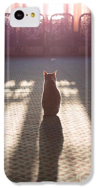Cat Sitting Near Window IPhone 5c Case by Matteo Colombo