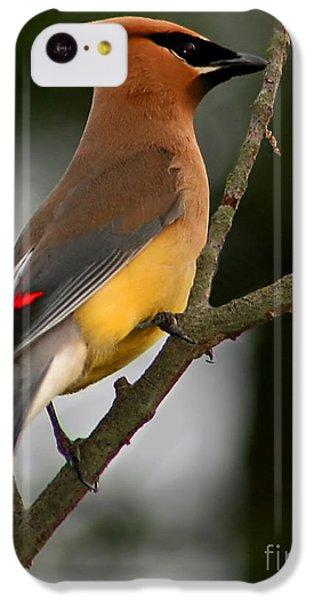 Cedar Waxing iPhone 5c Case - Cedar Wax Wing II by Roger Becker