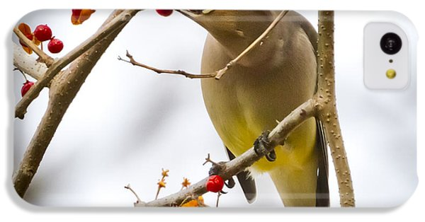 IPhone 5c Case featuring the photograph Cedar Waxwing by Ricky L Jones