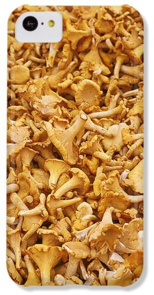 Chanterelle Mushroom IPhone 5c Case by Anonymous