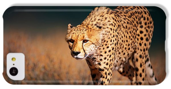 Cheetah iPhone 5c Case - Cheetah Approaching From The Front by Johan Swanepoel