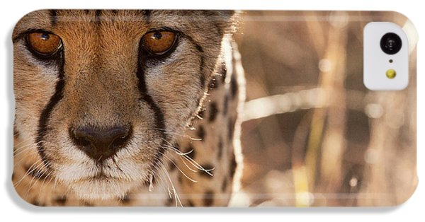 Cheetah Conservation Fund, Namibia IPhone 5c Case