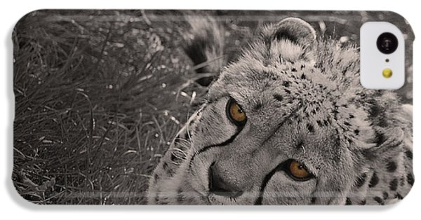 Cheetah Eyes IPhone 5c Case