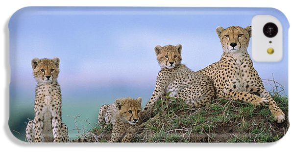 Cheetah Mother And Cubs Masai Mara IPhone 5c Case