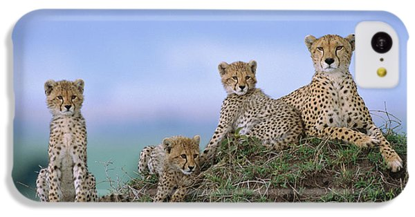 Cheetah Mother And Cubs Masai Mara IPhone 5c Case by Yva Momatiuk John Eastcott