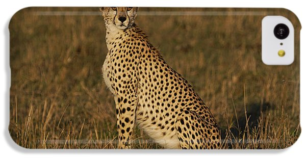 Cheetah On Savanna Masai Mara Kenya IPhone 5c Case