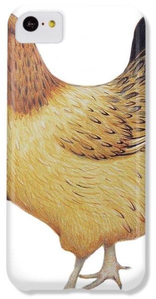 Chicken IPhone 5c Case