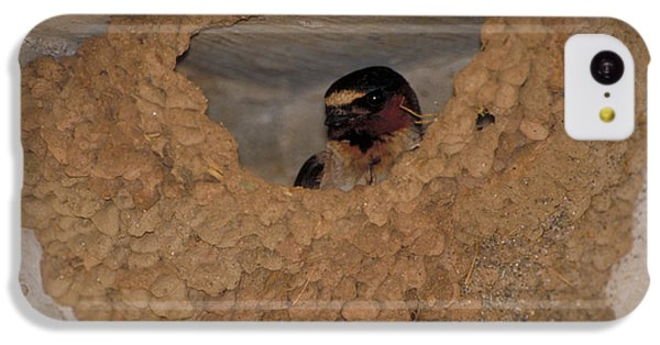 Cliff Swallows IPhone 5c Case by Paul J. Fusco