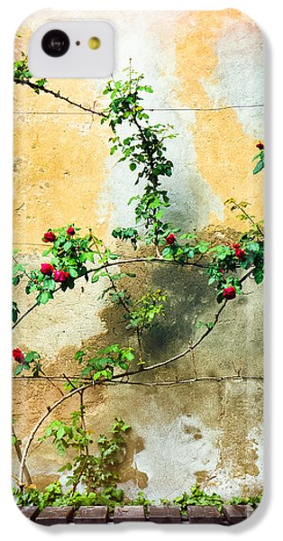 IPhone 5c Case featuring the photograph Climbing Rose Plant by Silvia Ganora