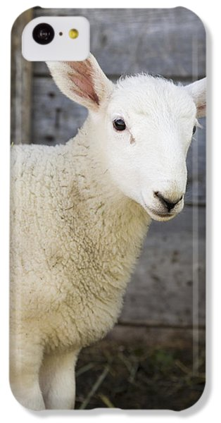 Sheep iPhone 5c Case - Close Up Of A Baby Lamb by Michael Interisano