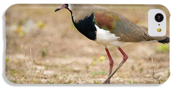 Close-up Of A Southern Lapwing Vanellus IPhone 5c Case