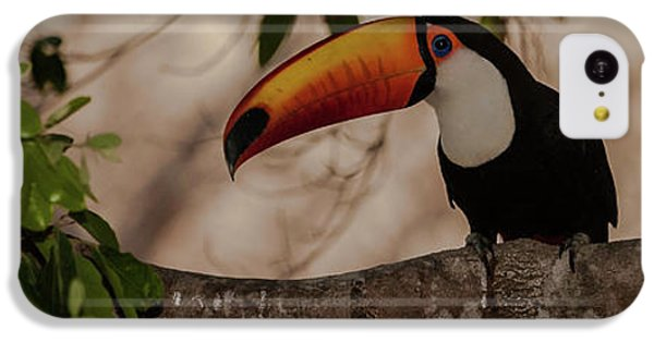 Close-up Of Tocu Toucan Ramphastos Toco IPhone 5c Case by Panoramic Images