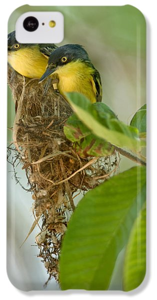 Flycatcher iPhone 5c Case - Close-up Of Two Common Tody-flycatchers by Panoramic Images