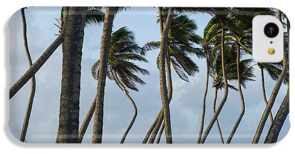 Belize iPhone 5c Case - Coconut Palm (cocos Nucifera by Pete Oxford