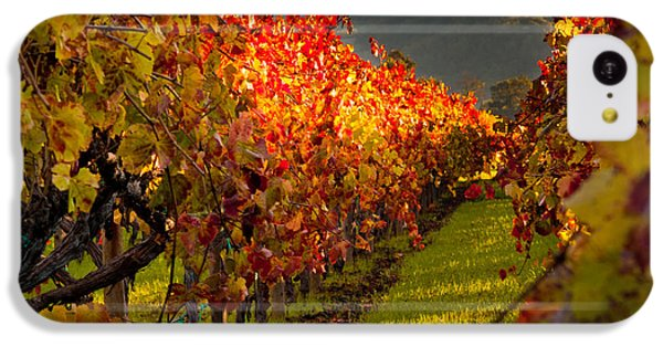 Color On The Vine IPhone 5c Case