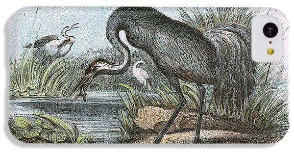 Common Crane IPhone 5c Case by English School
