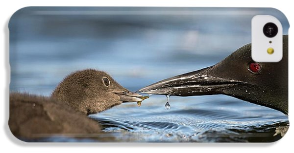 Loon iPhone 5c Case - Common Loon Feeding Chick by Dr P. Marazzi
