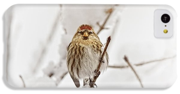 Finch iPhone 5c Case - Common Redpoll by Susan Capuano