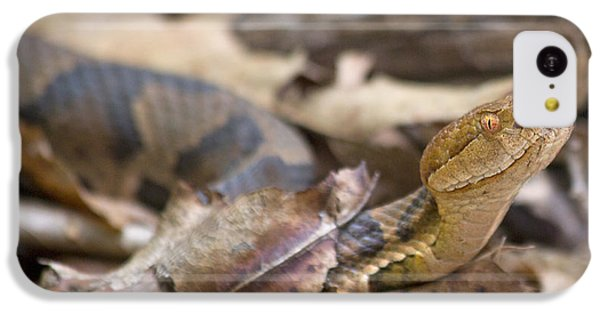 Copperhead In The Wild IPhone 5c Case by Betsy Knapp