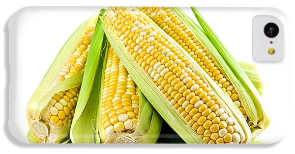Vegetables iPhone 5c Case - Corn Ears On White Background by Elena Elisseeva