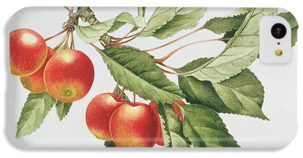 Crab Apples IPhone 5c Case by Sally Crosthwaite