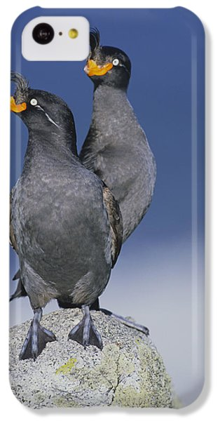 Crested Auklet Pair IPhone 5c Case