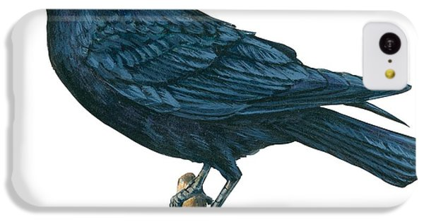 Crow IPhone 5c Case by Anonymous