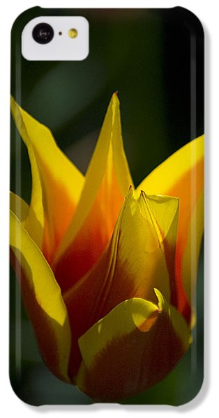 IPhone 5c Case featuring the photograph Crown Tulip by Yulia Kazansky