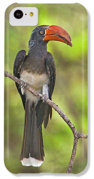Crowned Hornbill Perching On A Branch IPhone 5c Case