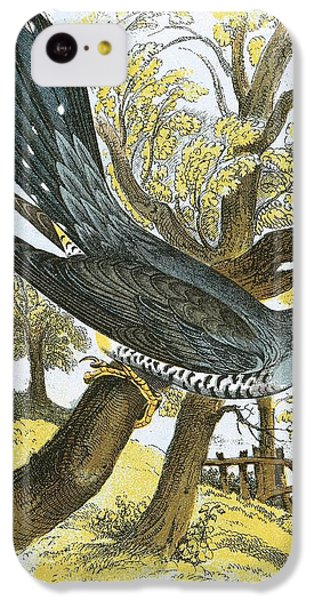 Cuckoo iPhone 5c Case - Cuckoo by English School